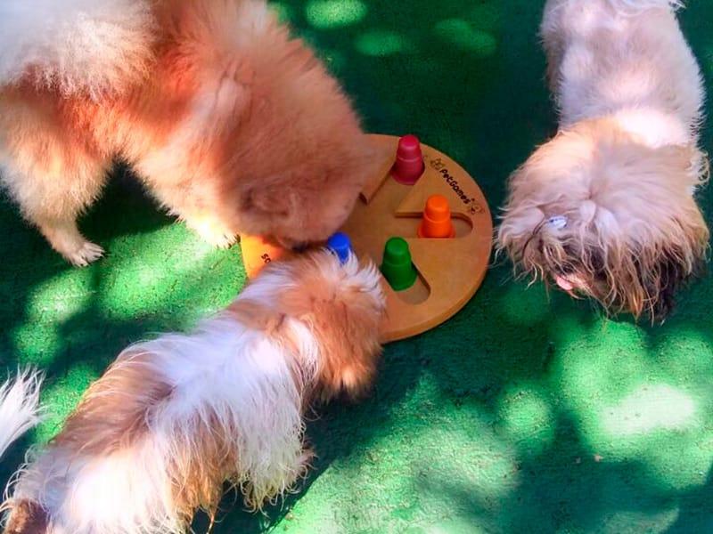 Brinquedos Interativos Para Cachorros