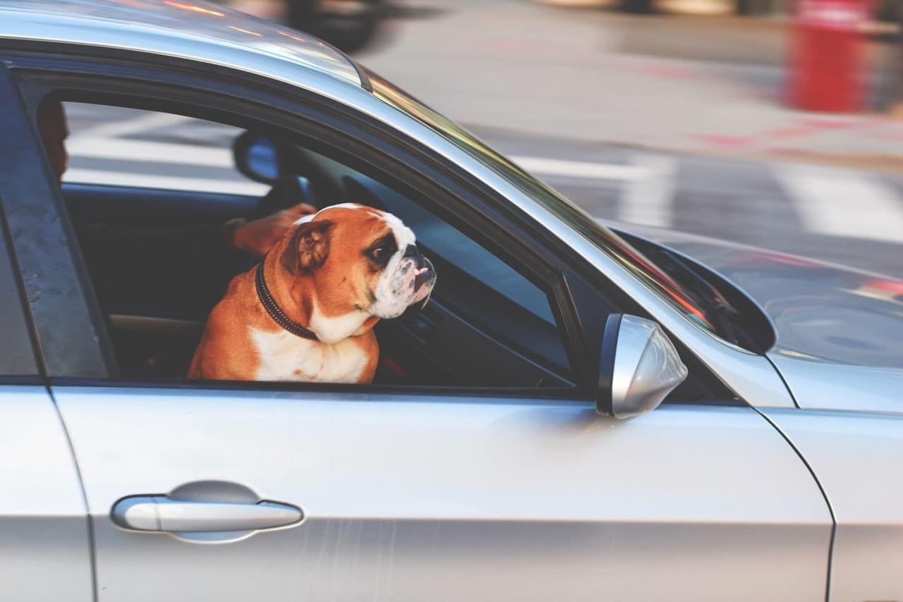 Segurança Dos Pets Nos Passeios De Carro
